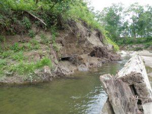 Daniels Park Stream Restoration Planning