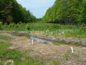 Sulphur Springs Headwater Wetland Restoration